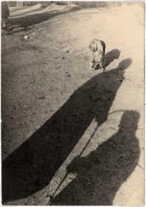 Der bedrohte Hund